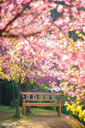 1135260918 istock photo garden bench under the Pink sakura, blur style 588595278