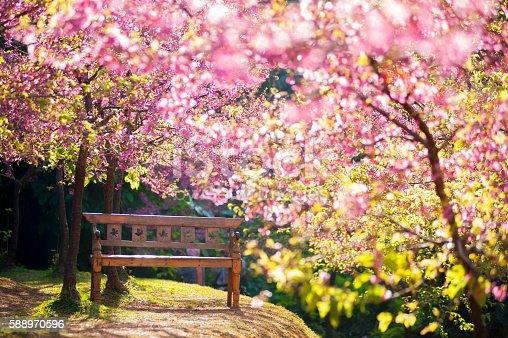 1135260918 istock photo garden bench under the Pink sakura, blur style 588970596