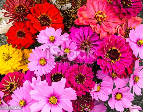 Fresh, garden grown flowers of many colors  offered for sale at a Vermont farmers market