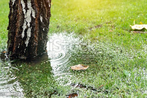 Garden bushes, tree and green grass lawn covered with water due to snow melting thaw and flash high water at spring. Natural disaster deluge flooded house backyard pathway ang greenery at countryside.