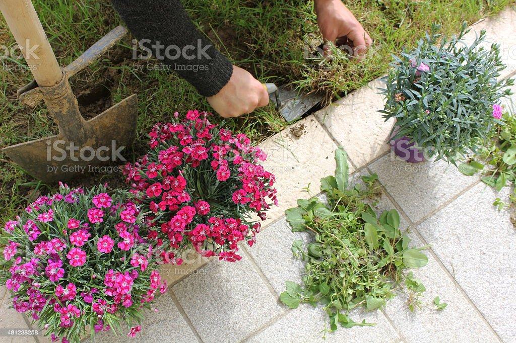 Garden care. stock photo