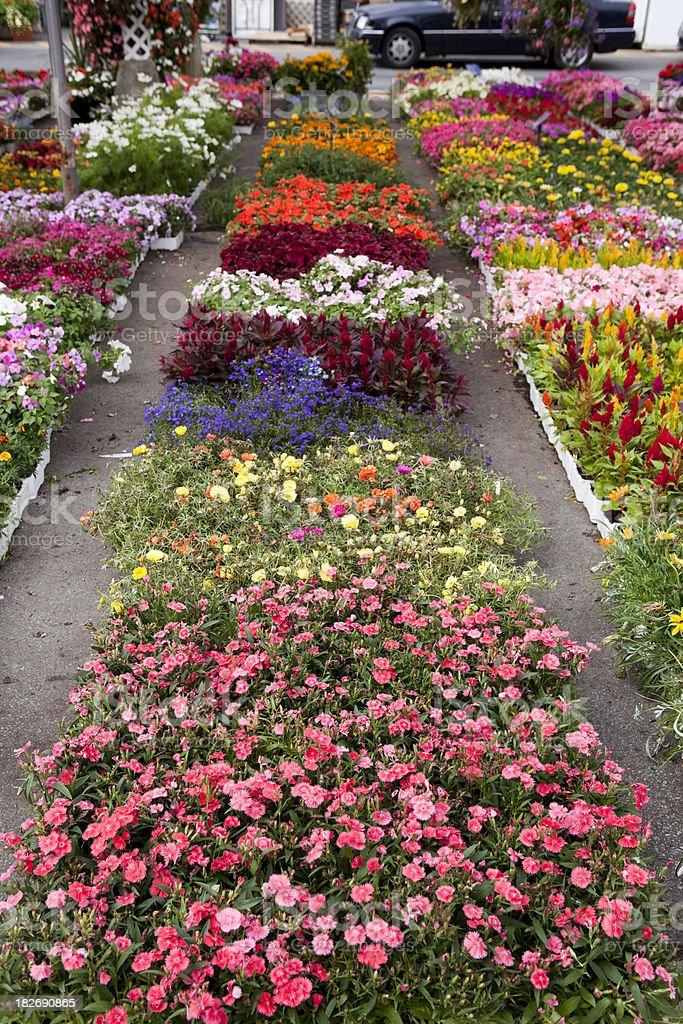 Garden center and plant nursery with flowers for spring gardening garden center and plant nursery with flowers for spring gardening royalty free stock photo mightylinksfo