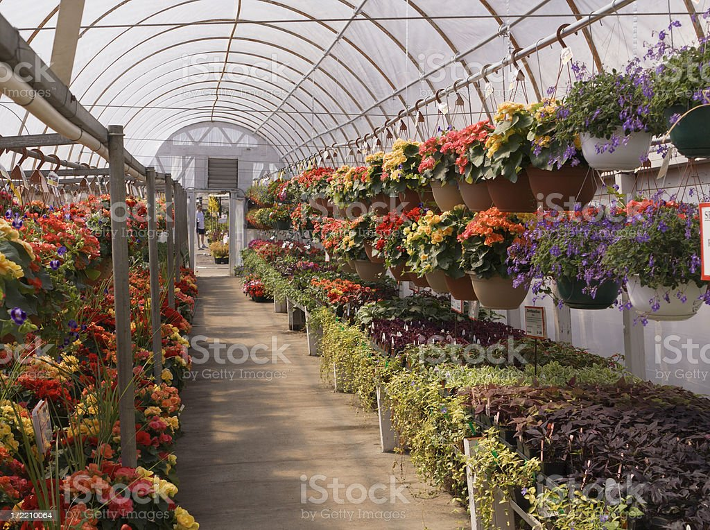 Garden Center Nursery Greenhouse with Potted Flower Plants Retail Display royalty-free stock photo