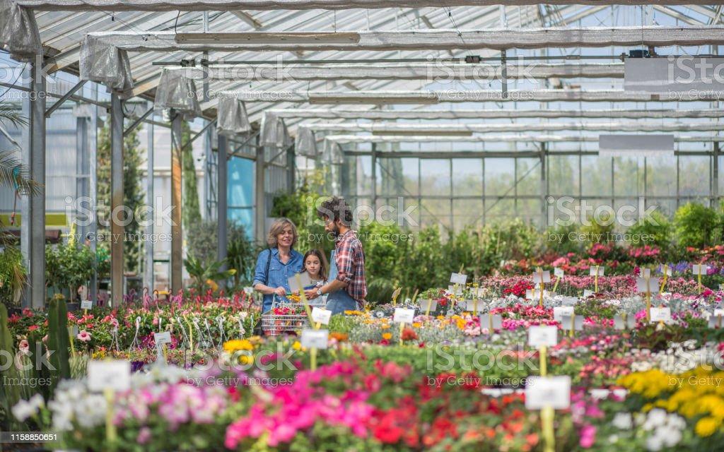 Garden center flowering plants display
