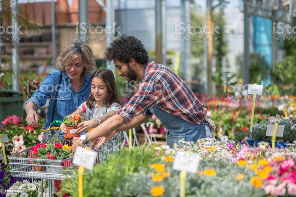 Garden center display of outdoor flowering plants on sale