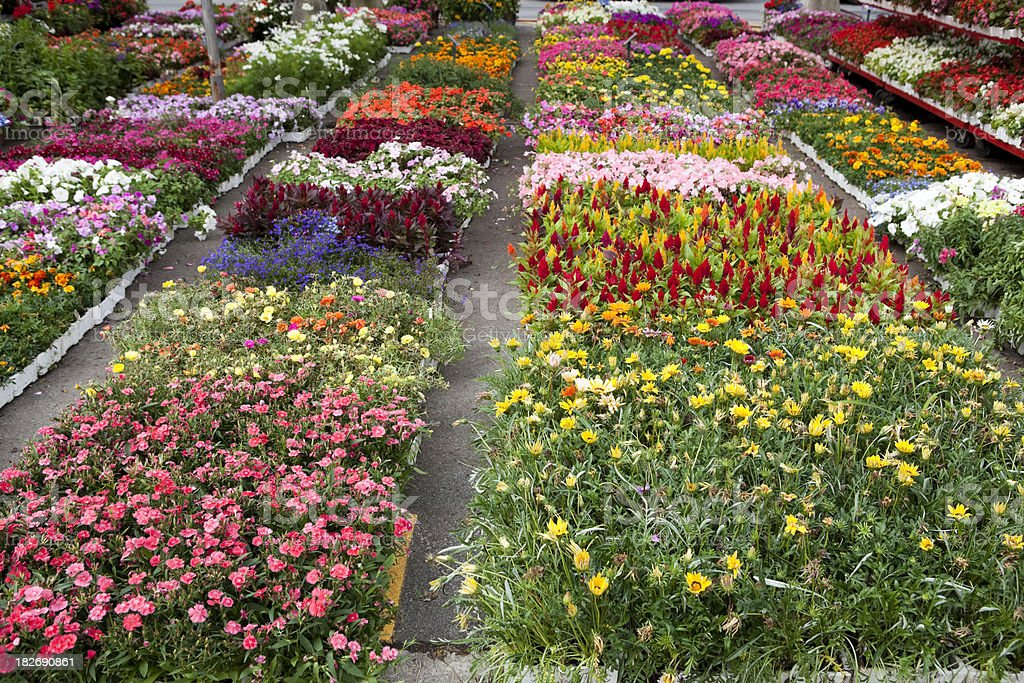 Garden centre with rows of colourful flowers royalty-free stock photo