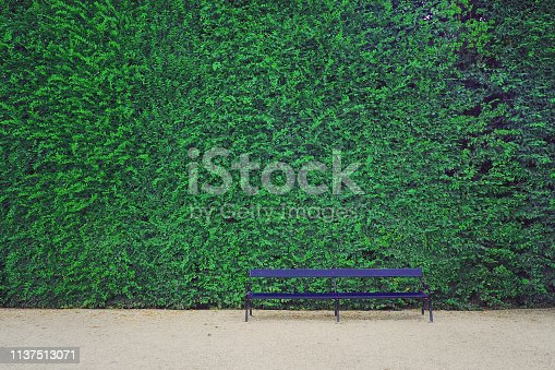 istock garden chair at the park with green leaves wall background 1137513071
