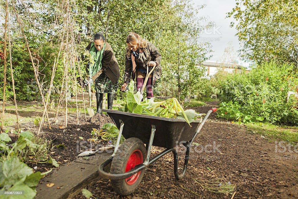 Garden Clearance stock photo