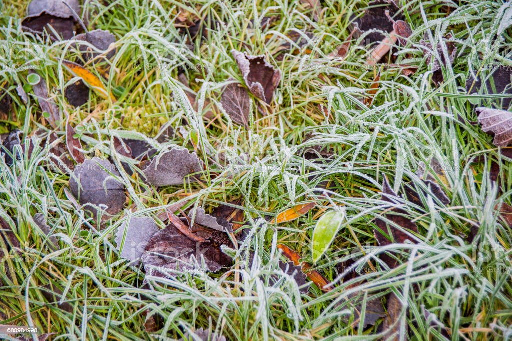 garden covered in frost royalty-free stock photo