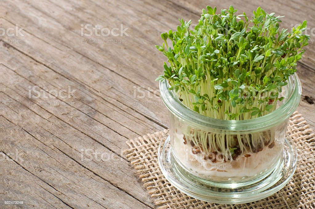 Garden cress on old wood with copy space stock photo