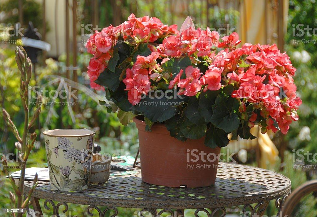 Garden decoration foto
