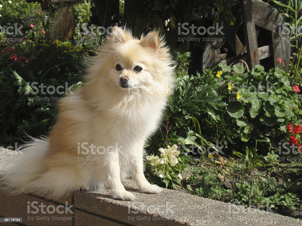 garden dog royalty-free stock photo