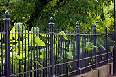 Garden fence made of iron in black
