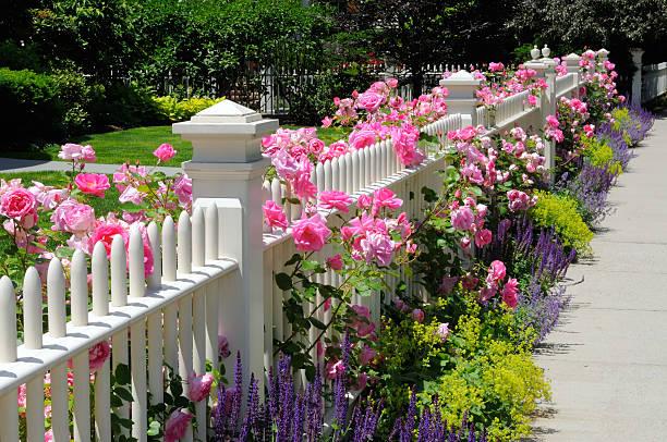gartenzaun, rosa rosen - lattenzaun garten stock-fotos und bilder