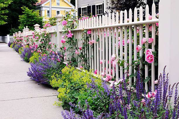 gartenzaun, rosa rosen, salbei - lattenzaun garten stock-fotos und bilder