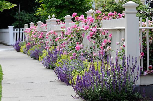 gartenzaun mit rosen - lattenzaun garten stock-fotos und bilder