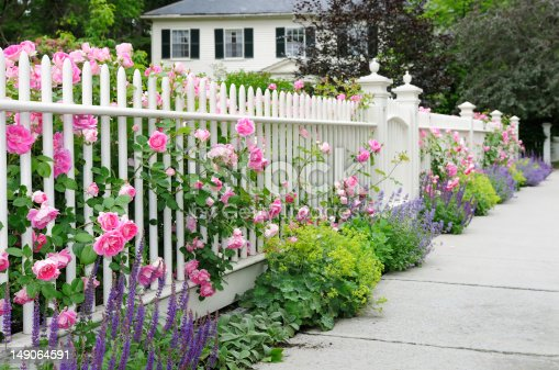 Elegant white garden fence and gate with pink roses, salvia, catmint, lady's mantle flowers and bushes bordering house entrance.