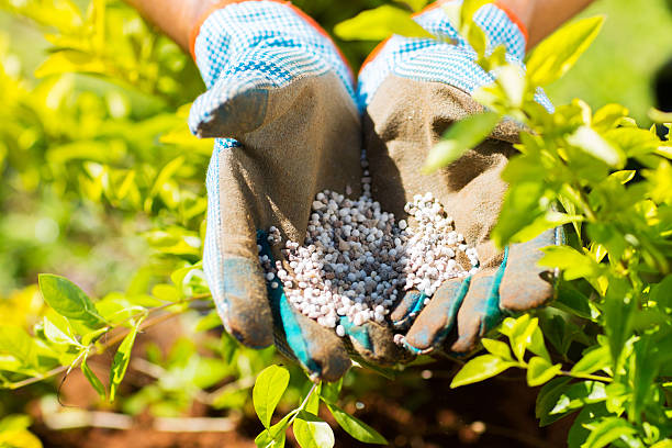 garden fertilizer stock photo