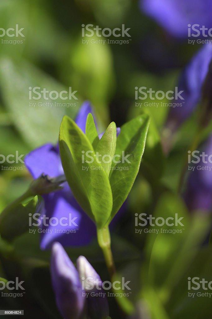 Garden flower close up royalty free stockfoto