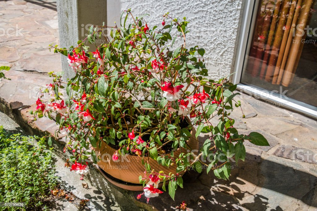 Le jardin flower  photo libre de droits