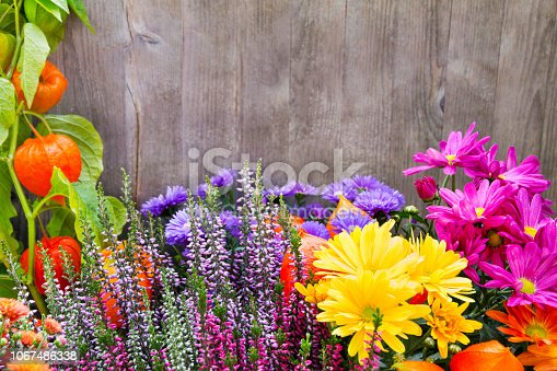 Garden flowers and wooden background close up