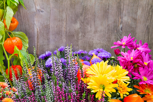 Garden flowers and wooden background