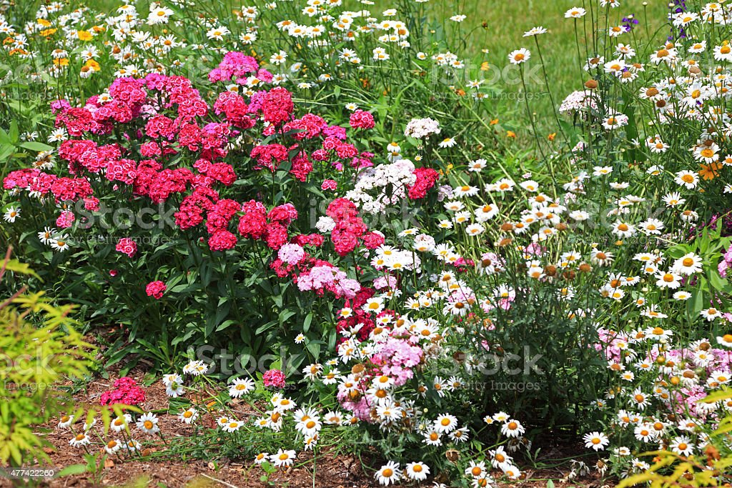 Garden Flowers Daisies, Pinks and Coreopsis stock photo