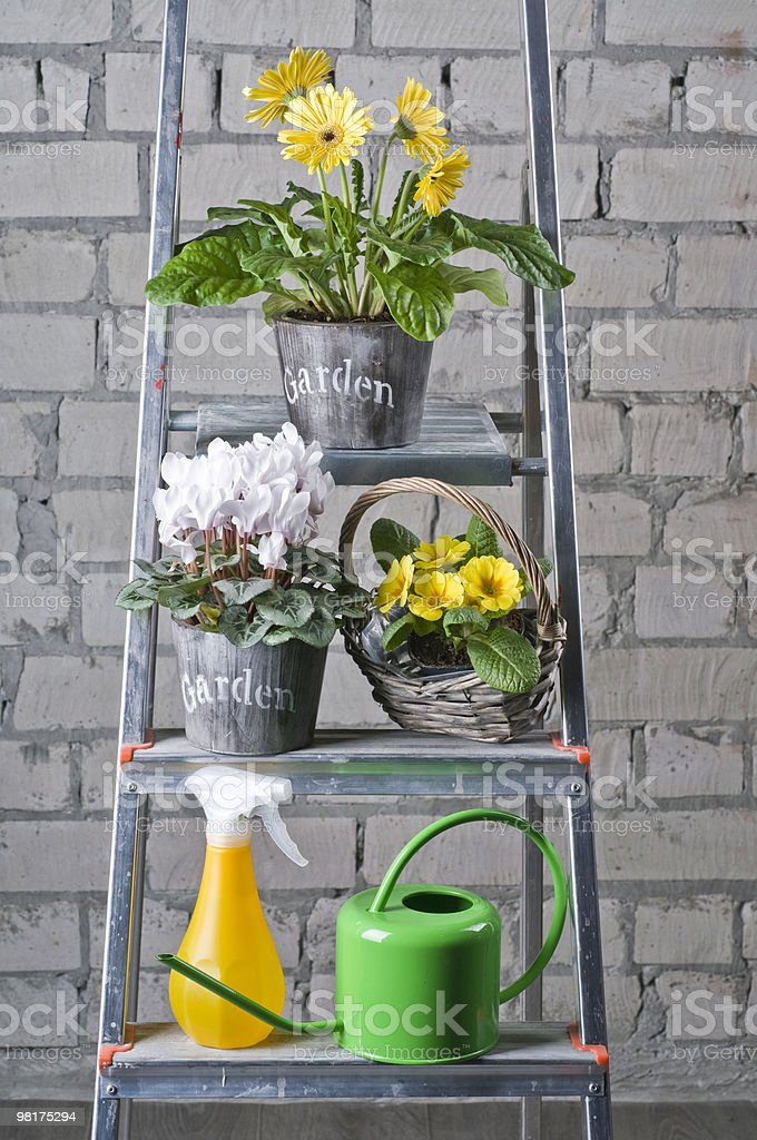 Garden flowers in pots royalty-free stock photo