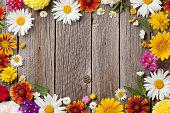 istock Garden flowers over wood 582302054