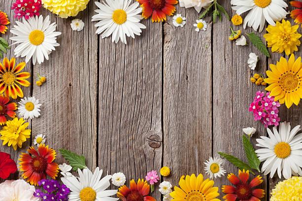 Garden flowers over wood picture id582302054?b=1&k=6&m=582302054&s=612x612&w=0&h=4zb7e7cjqihxbprc6crhajcd4qgw m8zac q95esjsg=