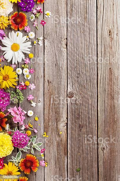 Garden flowers over wooden background picture id586693504?b=1&k=6&m=586693504&s=612x612&h=mztfgedrwkvkqlatdcw3qk1qvvlxl9efzjtwwx1rhim=