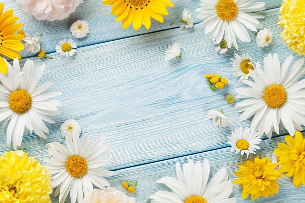 garden flowers over wooden background - schöne bilderrahmen stock-fotos und bilder