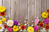 istock Garden flowers over wooden background 594461722