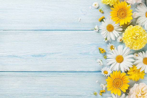 garden flowers over wooden background - bahar stok fotoğraflar ve resimler