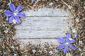 istock Garden flowers over wooden background 816099430