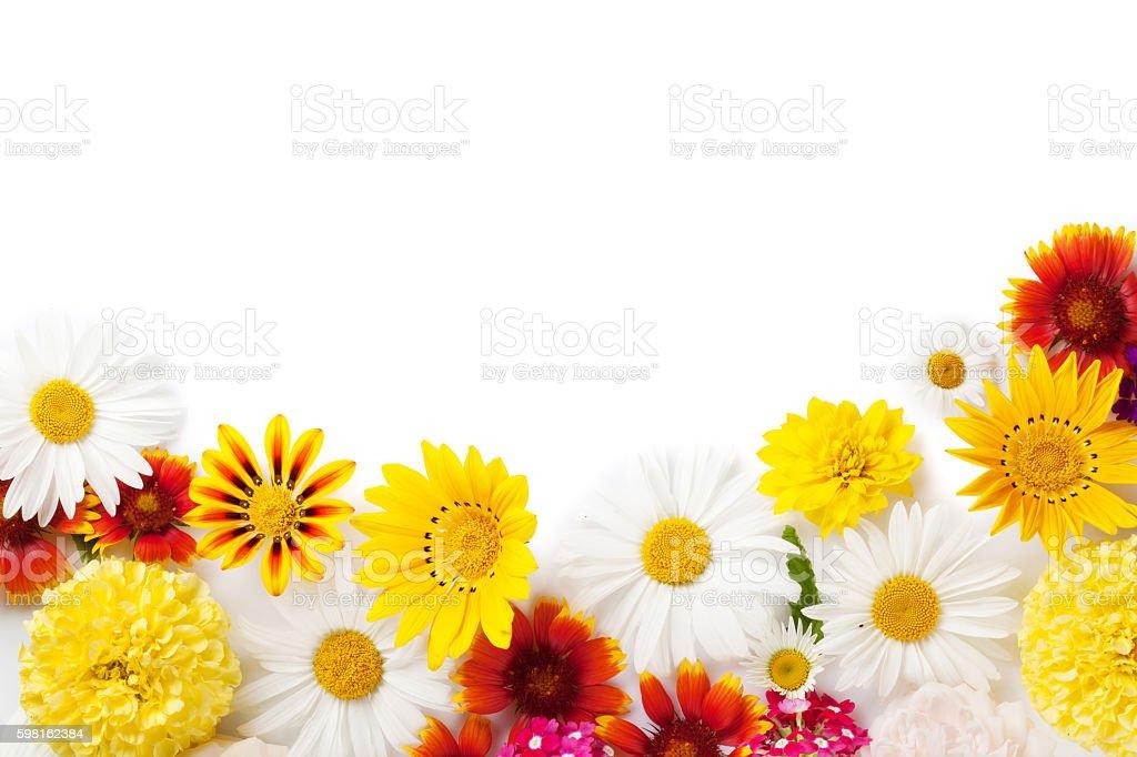 Garden flowers stock photo