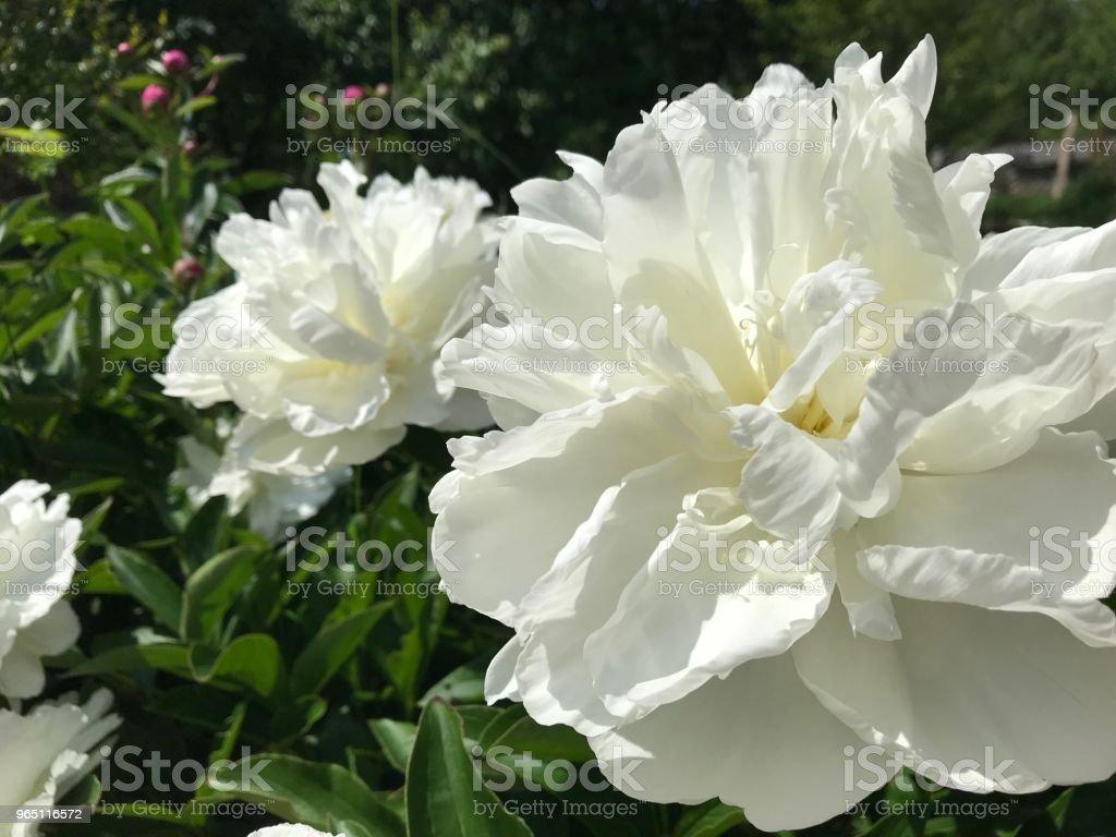 Garden flowers zbiór zdjęć royalty-free