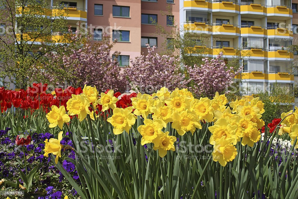 Garden flowers, Tulip, Daffodil, Pansies stock photo
