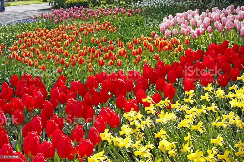 Ogrod Kwiaty 21 Xl Zdjecia Stockowe I Wiecej Obrazow Amsterdam
