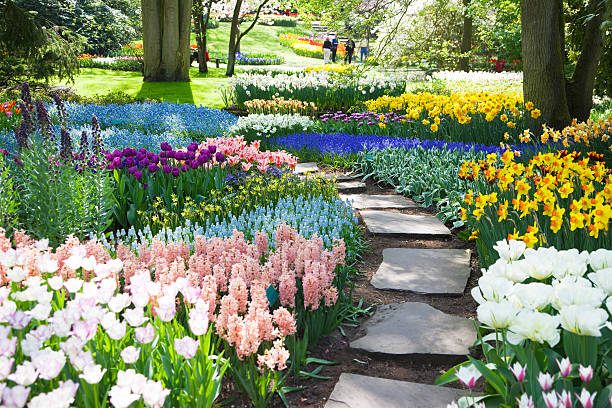 garden flowers # 53 xxxl - formal garden stock photos and pictures