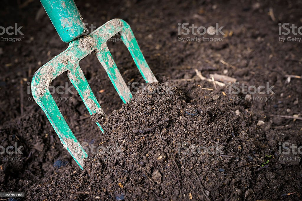 Garden fork turning composted soil stock photo
