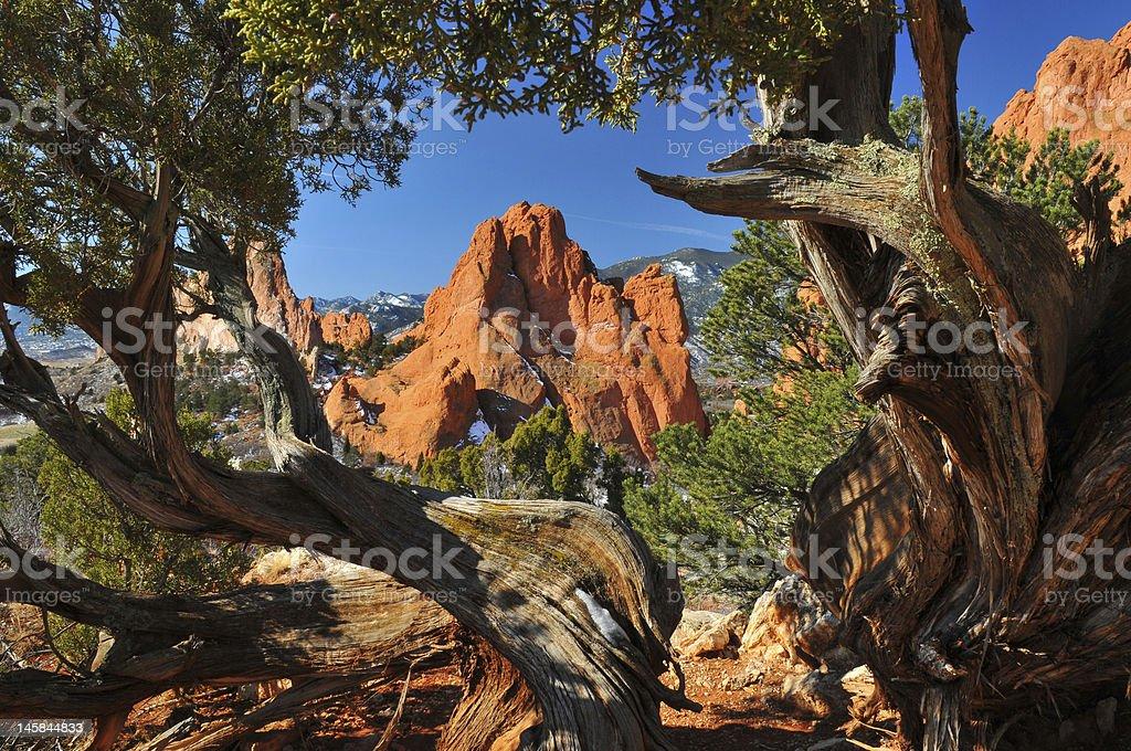 Jardín Enmarcado Por Los árboles Trenzado Enebro - Fotografía de ...