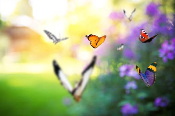 Garden full of butterflies picture id906102048?b=1&k=6&m=906102048&s=612x612&w=0&h=unmcm0edjmx5x iwk8hmkzqiaju2qcew464aq103ste=