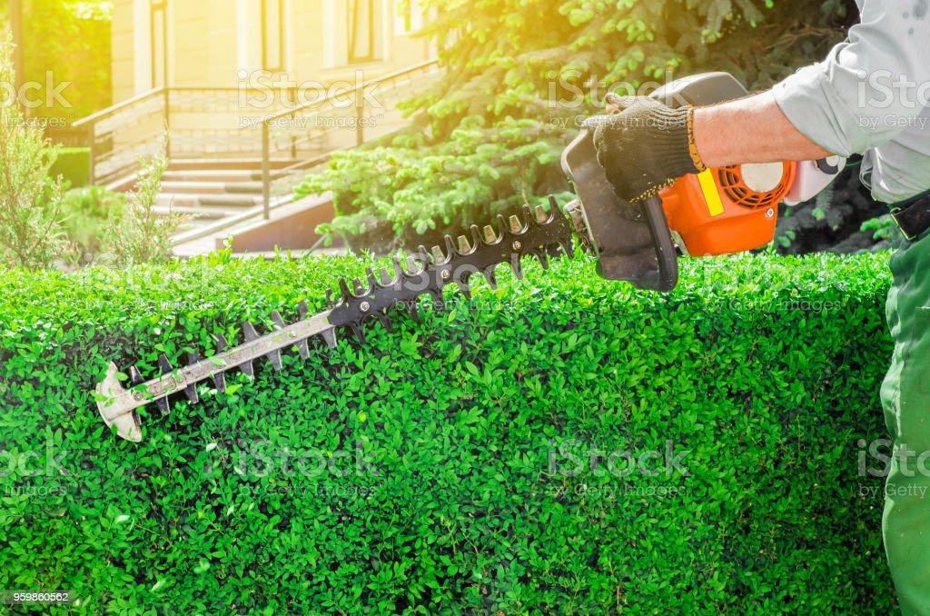 Garden gasoline scissors, trimming green bush, hedge. Working in the garden. Garden gasoline scissors, trimming green bush, hedge. Working in the garden. Arm Stock Photo