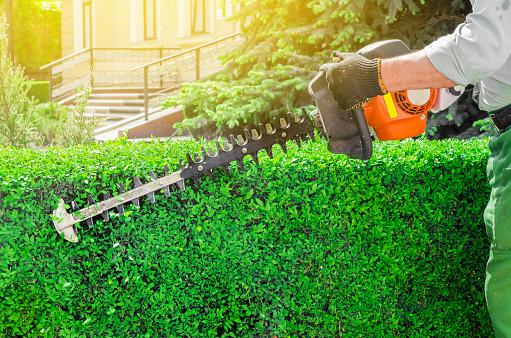 Garden Gasoline Scissors Trimming Green Bush Hedge Working In The Garden Stock Photo - Download Image Now