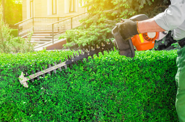 Garden gasoline scissors, trimming green bush, hedge. Working in the garden. stock photo