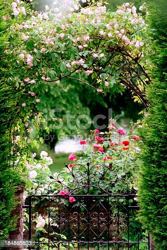 Garden gate with climbing roses and rose bushes