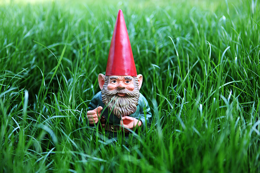 Garden gnome in a grass.