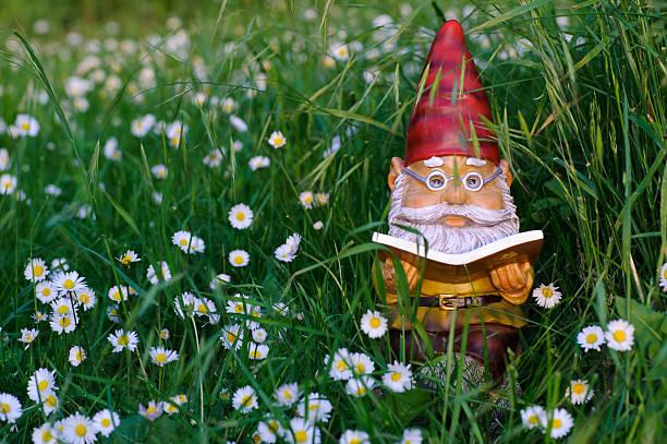 garden gnome liest buch - humor bücher stock-fotos und bilder