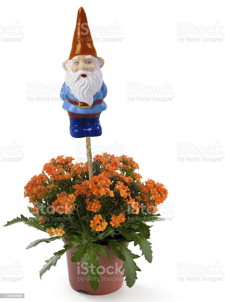 Nain De Jardin Avec Fleurs – Photos et plus d\'images de Barbe | iStock